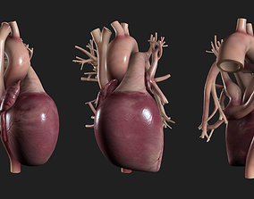 3D model low-poly Human Heart