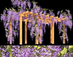 3D garden Fabaceae - Wisteria sinensis 2