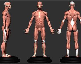 anatomy for sculptor 3D printable model