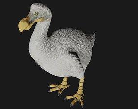 Dodo Bird 3D model rigged