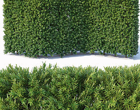 Taxus Baccata Nr3 - modular hedge H120cm 3D evergreen
