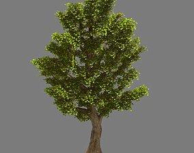 3D model Plant - Ginkgo Tree 02