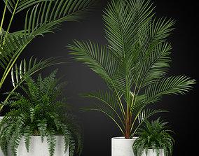 Plants collection 347 3D