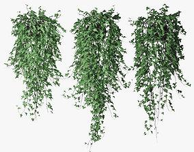 Ivy in pot 12 3D