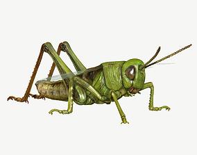 grasshopper Grasshopper 3D