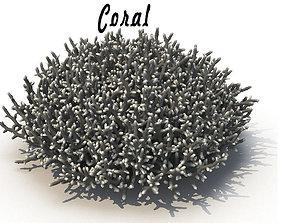 Coral polyp 3D model