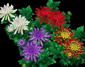 3D model Flower Chrysanthemum Morifolium