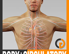 Human Male Body and Circulatory System - 3D