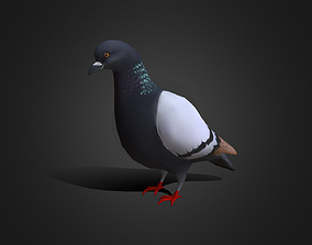 Low poly Rock Dove - Idle Animated 3D model