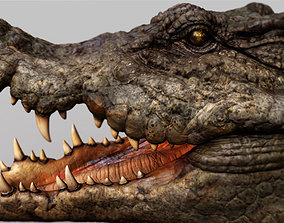 Crocodile 3d model reptile