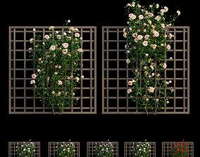 3D Plant rose set 17