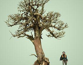 bark 3D Dead Tree