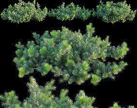 3D model Abies balsamea Dwarf balsam fir