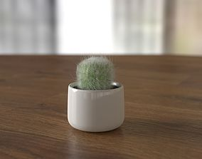 Potted cactus 3D model