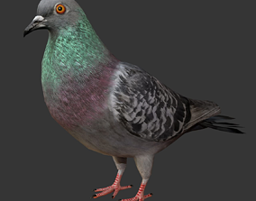 Pigeon Low Poly Rigged with high quality texture 3D asset