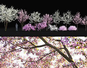 Cherry flowering Pack 01 3D