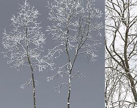 Ash-tree 06 winter 19 22m 3D