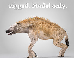3D model Spotted Hyena