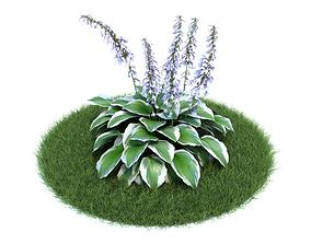 Blooming Plant Variegated Hosta 3D