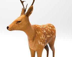 3D model Cute Deer Rigged