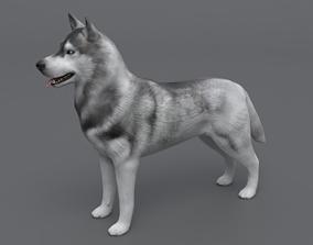 3D model VR / AR ready Husky