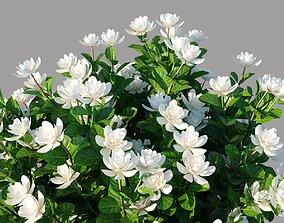 XfrogPlants Gardenia - Gardenia 3D model