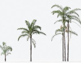3D Syagrus romanzoffiana Queen palm 01 Growfx and mesh