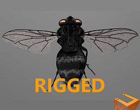 3D model Fly - rigged