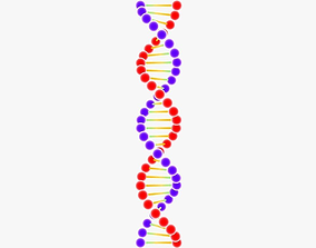 DNA Structure 3D model VR / AR ready