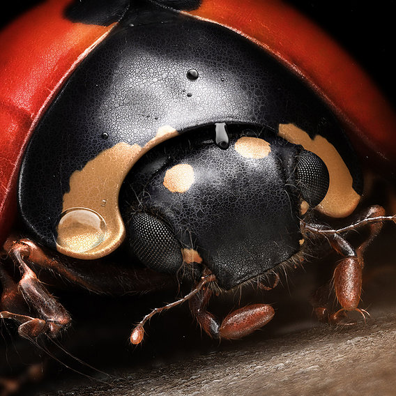 Mr Ladybird by Denis Bodart