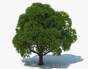 leaf 3D model Oak Tree