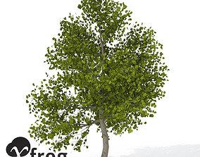 3D model XfrogPlants Italian Maple