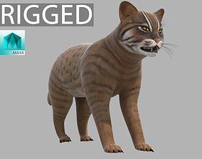 Lynx Animal 3D