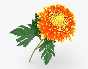 Chrysanthemum 3D