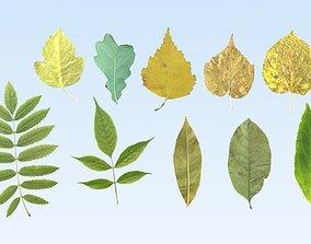 3D asset Lowpoly leaf set