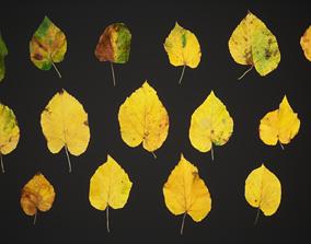 3D model Tilia Autumn Leaves 4k Scanned