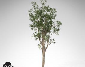 XfrogPlants Bluegum Eucalyptus 3D model