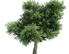 3D model Tree Arbutus Menziesii
