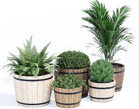 Wood pot barrel tree 3D