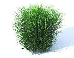 Porcupine grass 3D model