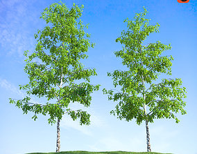 3D model Birch tree with grass
