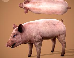 Dirty Pig 3D asset