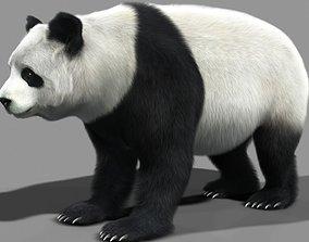 3D animated Panda A