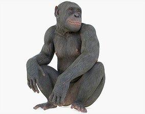 3D model Chimpanzee Posed