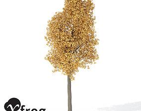 3D model XfrogPlants Autumn Ginkgo