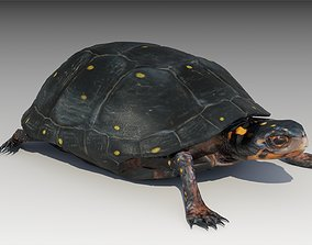 3D asset animated Spotted-turtle