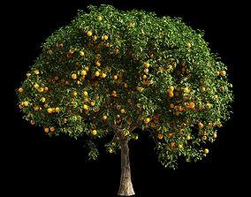 Orange Tree 14 3D model