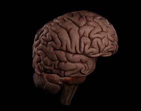 High Resolution 8k Brain System Pack 3D model