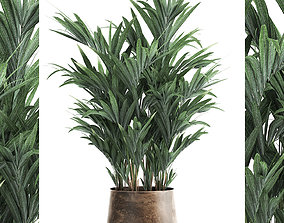 3D model Decorative palm in a Flowerpot for the interior 1