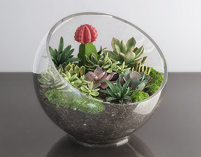 Succulents in glass bowl 3D
